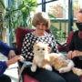 Dons de peluches thérapeutiques à la Fondation de l'Hôpital du Suroît
