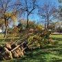 Plantation de près de 800 nouveaux arbres à Vaudreuil-Dorion en 2020