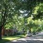 Environnement : Salaberry-de-Valleyfield diversifie sa forêt urbaine