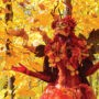 Le Festival des couleurs de Rigaud de retour du 9 au 11 octobre