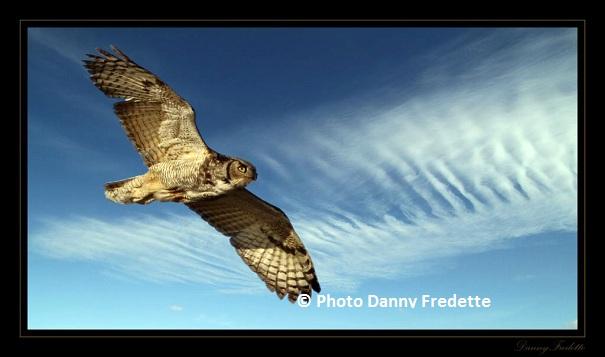 © Photo Danny Fredette - Grand duc d'Amérique