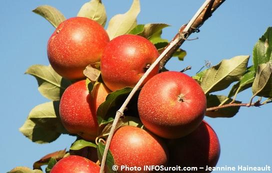 Pommes-automne-arbre-Photo-Jeannine-Haineault-pour-INFOSuroit-com_