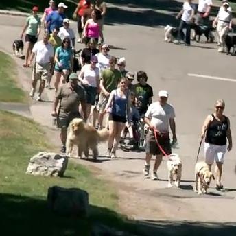 Club-Lions-du-Canada-Marche-chiens-guides-Purina-Photo-publiee-par-INFOSuroit-com_