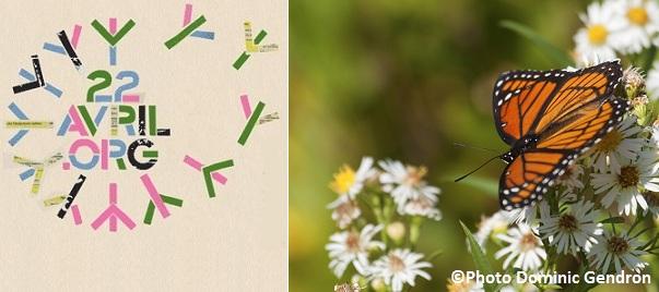 Jour-de-la-Terre-Papillon-Vice-roi-Photo-Dominic-Gendron-publiee-par-INFOsuroit-com_