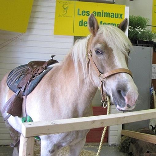 Moissons-en-fleurs-cheval-animaux-Photo-CFP-des-Moissons-publiee-par-INFOSuroit-com_