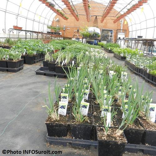 Serre-plantes-vivaces-Centre-des-Moissons-Beauharnois-Photo-INFOSuroit-com_