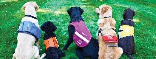 club-Lions-du-Canada-Marche-Purina-chiens-guides-Photo-publiee-par-INFOSuroit-com_