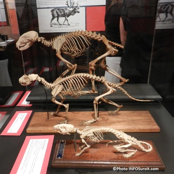 squelettes-raton-laveur-moufette-et-plus-expo-Pointe-du-Buisson-Photo-INFOSuroit-com_