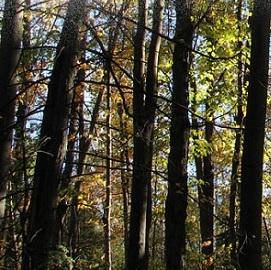 Centre-d-intendance-ecologique-Latreille-CIEL-Photo-courtoisie-CIEL-publiee-par-INFOSuroit-com_