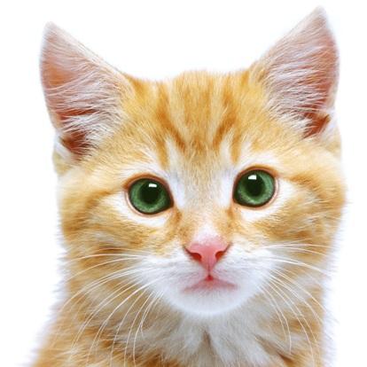 chat-chaton-SPCA-Photo-CPA-publiee-par-INFOSuroit-com_