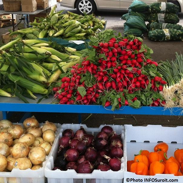 Ble-d-Inde-radis-oignons-legume-Marche-Valleyfield-Photo-INFOSuroit-com_