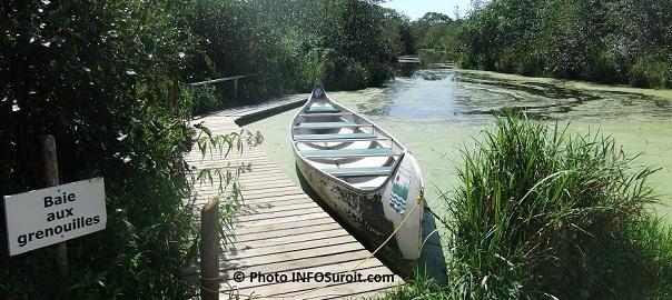 Reserve-nationale-de-faune-du-lac-Saint-Francois-Baie-aux-grenouilles-Photo-INFOSuroit-com_