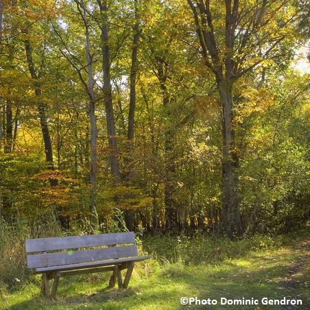 Erabliere refuge faunique Marguerite-d-Youville automne Photo Dominic Gendron publiee par INFOSuroit-com_