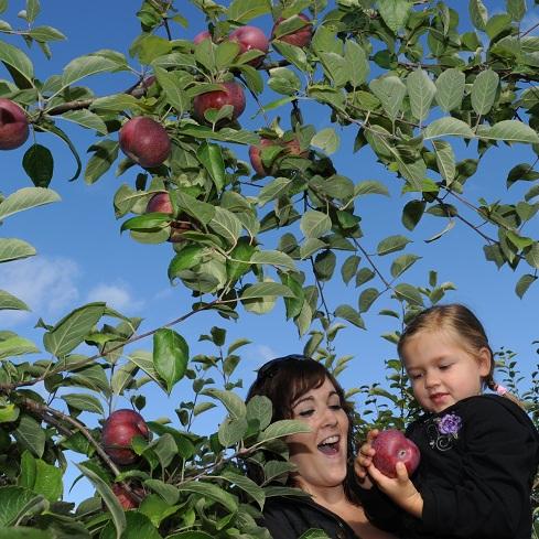 Temps-de-Pommes-cueillette-verger-enfant-Photo-Tourisme-Suroit-publiee-par-INFOSuroit-com_