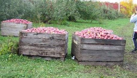 Vergers-Franklin-pommes-automne-Photo-courtoisie-Tourisme-Suroit-Vergers-Franklin-publiee-par-INFOSuroit-com_