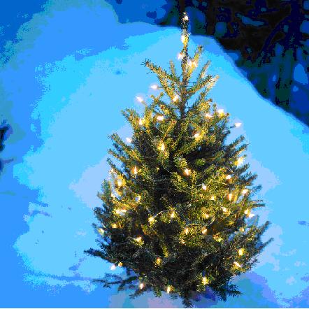 arbre-de-noel-image-cpa-publiee-par-INFOSuroit