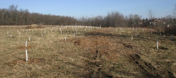 Bois-Robert-reboisement-phase-1-Photo-Ville-de-Beauharnois