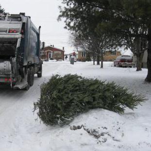Collecte-de-Sapins-de-Noel-naturels-recyclage-recuperation-Photo-courtoisie-publiee-par-INFOSuroit