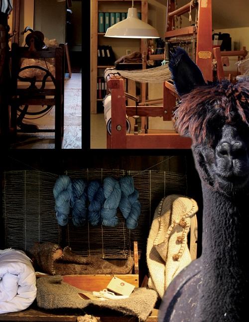 Exposition-Alpagas-Salle-Alfred-Langevin-Huntingdon-Photo-Courtoisie-publiee-par-INFOSuroit