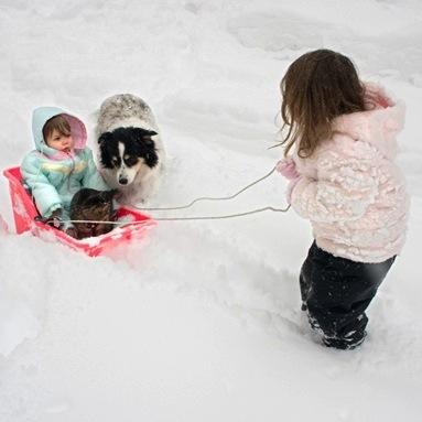 neige-enfants-chat-chien-traineau-hiver-Photo-CPA-publiee-par-INFOSuroit