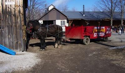 Cabane-a-sucre-L-Hermine-a-Havelock-chevaux-carriole-Photo-courtoisie-publie-par-INFOSuroit