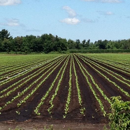 Enveloppe-budgetaire-CRE-VHSL-projets-agrilculture-et-agroalimentaire-photo-courtoisie-publiee-par-INFOSuroit