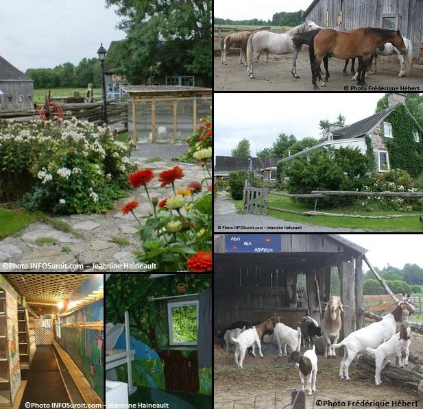 Ferme-d-Andre-a-Ormstown-fleurs-cour-arriere-maison-chevaux-chevres-Photos-Frederique_Hebert-et-INFOSuroit-Jeannine_Haineault