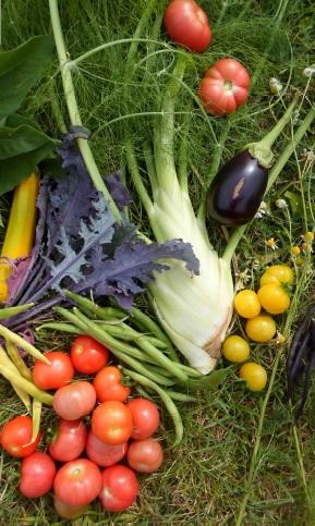 Legumes-du-potager-Incroyables_Comestibles-Valleyfield-ecole-Marie_Rose-photo-courtoisie-publiee-par-INFOSuroit_com