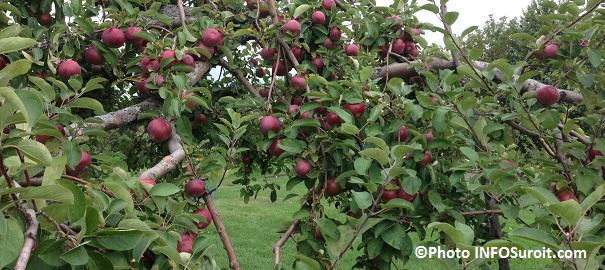 Pommes-vergers-automne-Photo-INFOSuroit_com