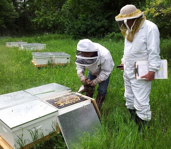 Ruches-abeilles-miel-de-l-Ile-St-Bernard-Photo-courtoisie-Heritage-St-Bernard
