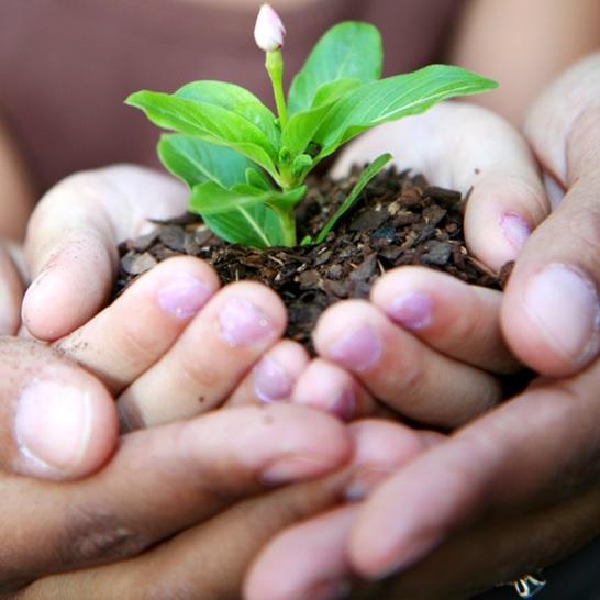soutien-aide-enfant-parent-fleur-Photo-CPA-publiee-par-INFOSuroit_com