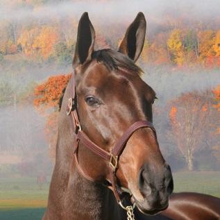 Rendez-vous-Celebrite-pour-adeptes-du-monde-equin-28-nov-a-Valleyfield-Photo-La-Coop