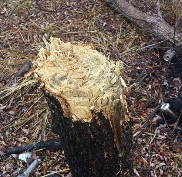 Vandalisme-refuge-faunique-Marguerite-D_Youville-Heritage-Saint_Bernard-Frene-Pennsylvanie-photo-courtoisie-publiee-par-INFOSuroit_com