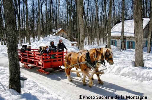 Sucrerie-de-la-Montagne-hiver-chevaux-caleche-cabane-erables-©Photo-Sucrerie-de-la-Montagne
