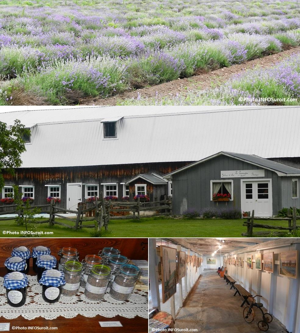Le-Lavandou-a-Franklin-agrotourisme-champ-de-lavande-galerie-d-art-Photos-INFOSuroit_com
