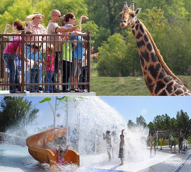 parc-Safari-a-Hemmingford-girafe-visiteurs-et-Aquaparc-Photos-courtoisie-Tourisme-Suroit-via-site-Web-ParcSafari