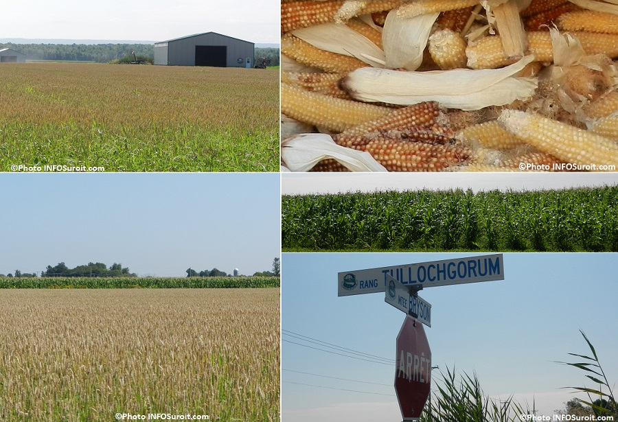 Ferme-Tullochgorum-Ormstown-batiments-champ-de-mais-et-identificationrue-Photos-INFOSuroit_com