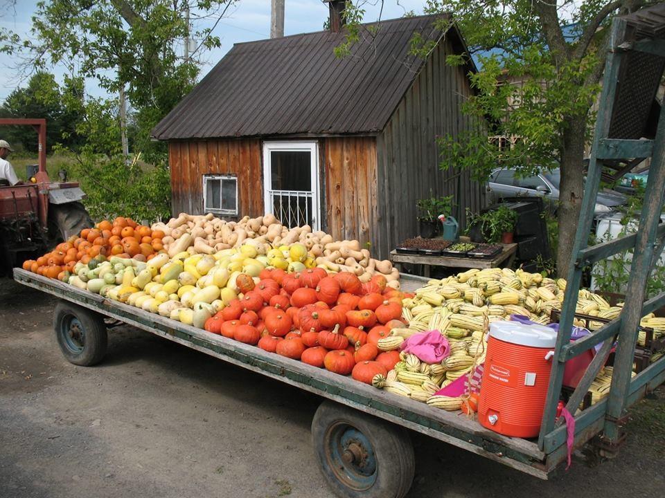 Cooperative-Jardins-de-la-resistance-legumes-photo-courtoisie-publiee-par-INFOSuroit_com