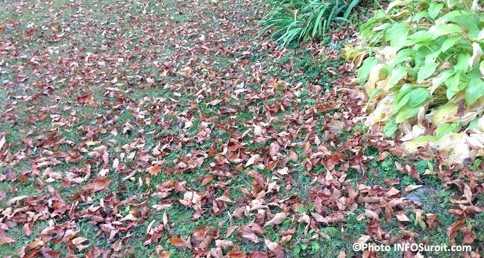 feuilles mortes saison automne couleur Photo INFOSuroit_com
