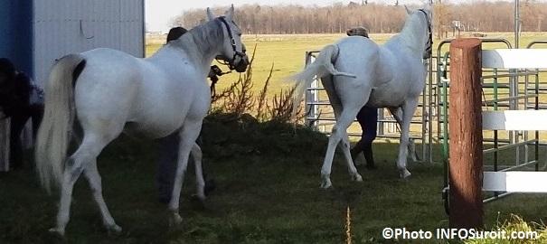 cheval-chevaux-enclos-ecurie-agroparc-CFP-des-Moisssons-Coteau-du-Lac-Photo-INFOSuroit_com