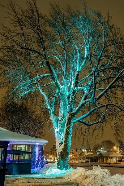 Arubulux-arbre-erable-geant-parc-Delpha_Sauve-Valleyfield-photo-courtoisie-publiee-par-INFOSuroit_com