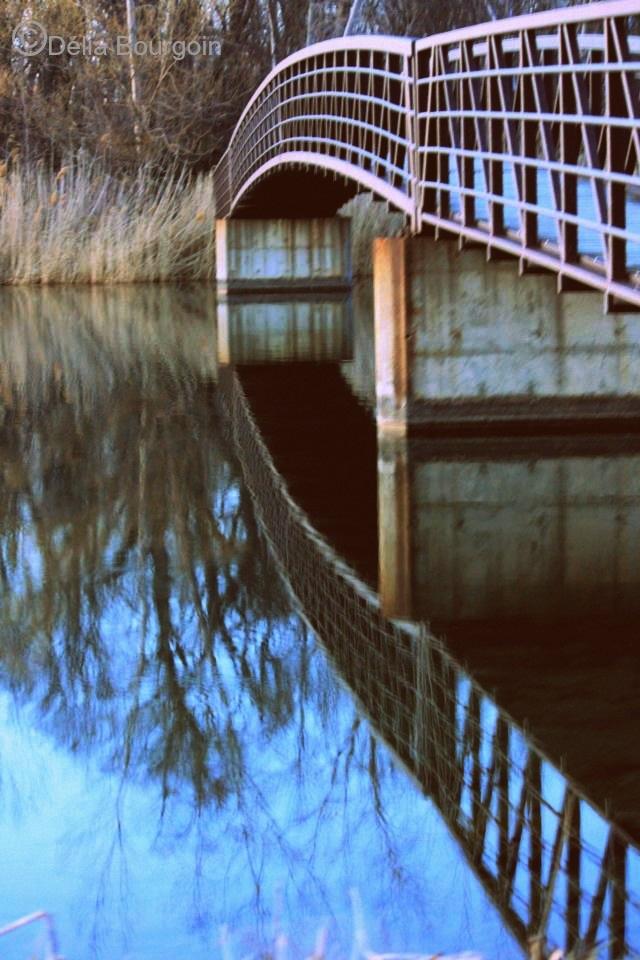 Reflexion-photo-Delia_Bourgoin-publiee-par-INFOSuroit_com