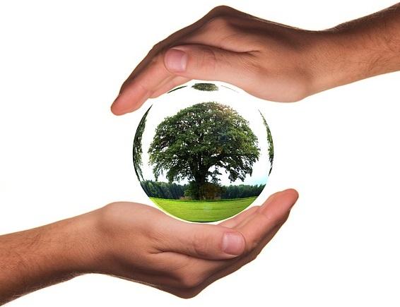 Environnement-ecologie-arbre-nature-ecosysteme-image-Pixabay-publiee-par-INFOSuroit_com