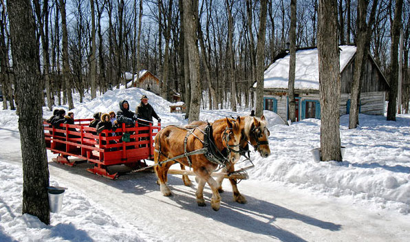 Sucrerie de la Montagne 2008 carriole chevaux erables Photo courtoisie Tourisme Suroit