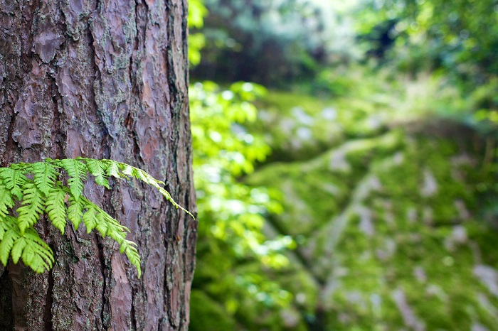 Bois arbre foret agroforesterie Photo Pixabay