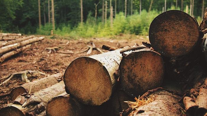 Bois foret arbres coupes Photo Pixabay