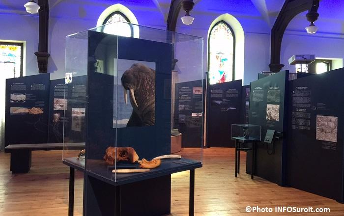 Phoque morse exposition Fantastiques monstres marins au MUSO Photo INFOSuroit_com