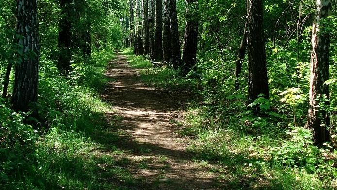 bois foret arbres sentier saison estivale Photo Pixabay via INFOSuroit