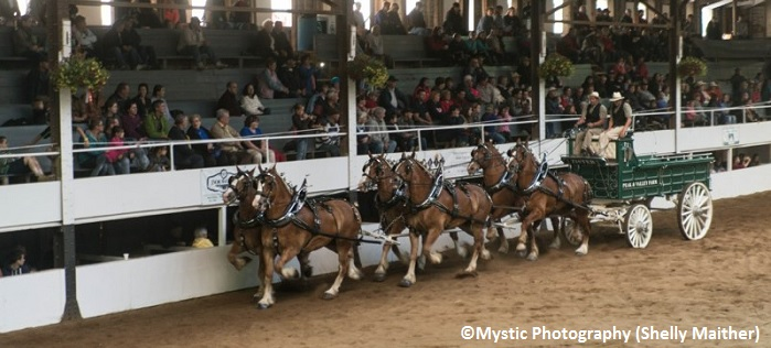 Expo Ormstown spectacle chevaux et attelages spectacteurs Copyright Photo Mystic-Photography par Shelly_Maither
