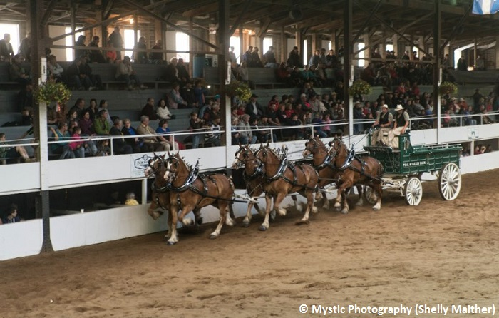 Expo_Ormstown spectacle chevaux et attelages spectacteurs Copyright Photo Mystic-Photography par Shelly_Maither